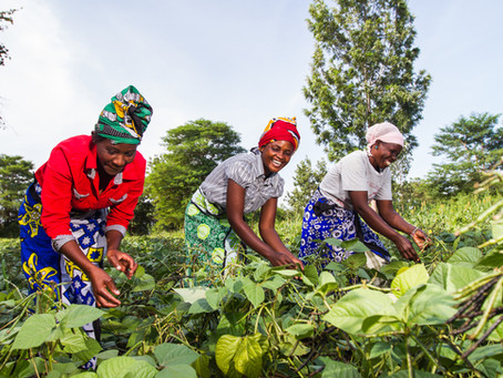 Small Scale Farmers' Resilience to Covid-Related Shocks