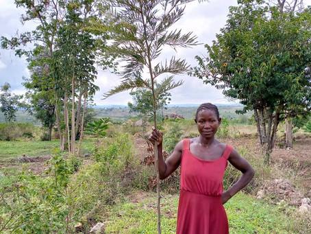 Plant a tree, change a life