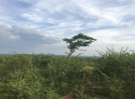 Buy a tree in Tanzania for Christmas