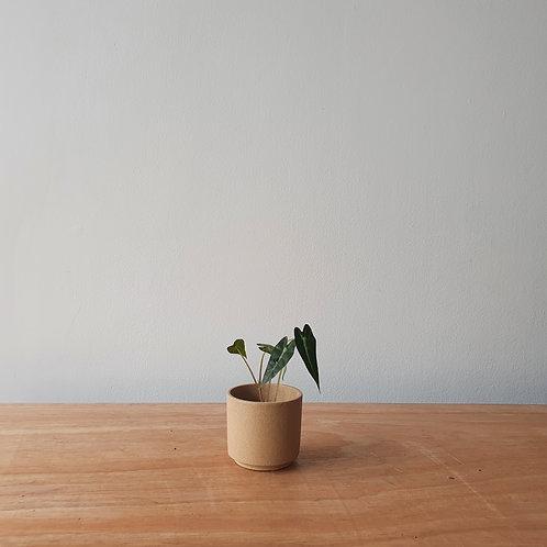 Cachepot Lirio | Terra | Pequeno