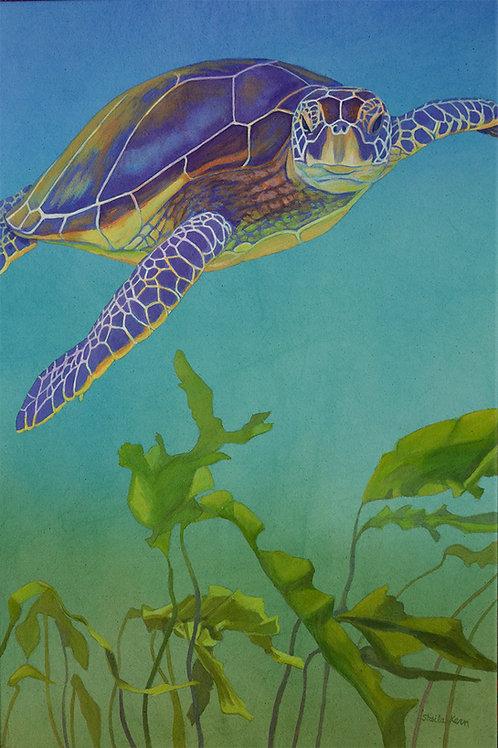 Sea Turtle with Kelp Card