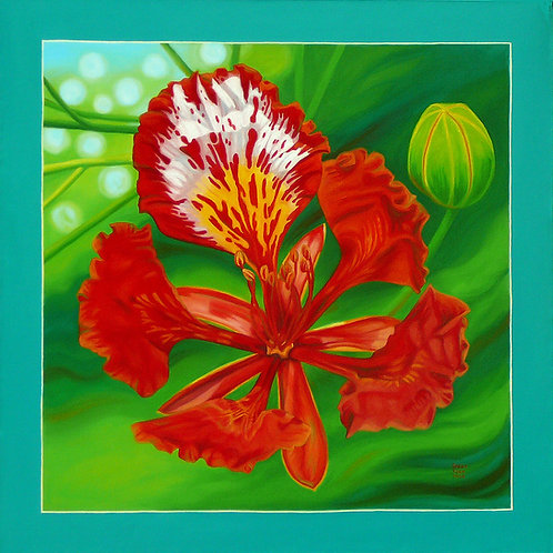 St. Lucia Flaming Flower