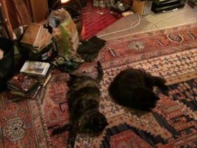 Bindi & Bertie