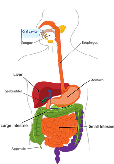 peg-feed-digestive-system.png