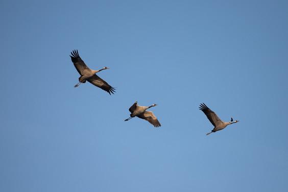 crane-2994842_1920.jpg