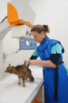 Dr. Romana Jäggi bei der Röntgenvorbereitung