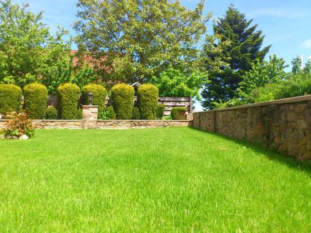 Plantations et voisinage, quelles sont les règles ?