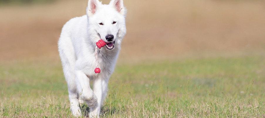 Dog Training Cumbria
