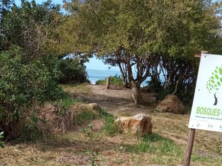 Bosque da Memória' em área de restinga é alvo de depredação em Ubatuba