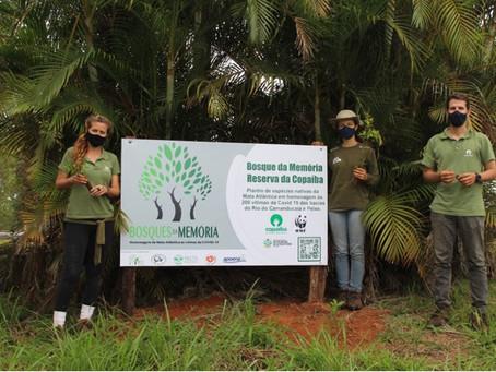 Copaíba homenageia vítimas da Covid-19 com plantio árvores