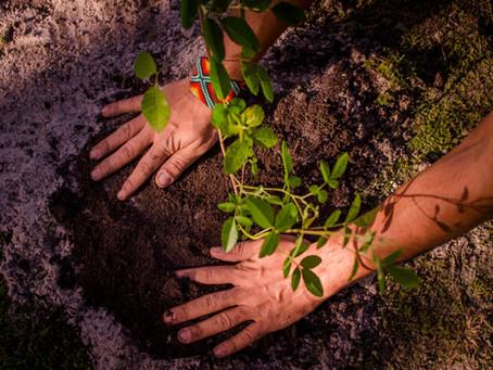 Mais um plantio da Campanha Bosque da Memória