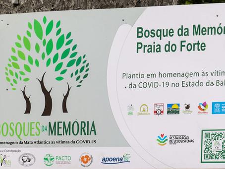 Bosque da Memória Praia do Forte Realiza mais um plantio