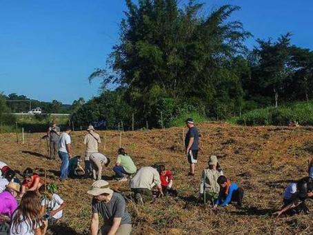 Ação homenageia vítimas da covid-19 com plantio de 200 mil árvores