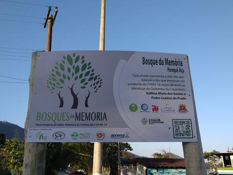 Bosque Pereque Açu -Instituto da Árvore Ubatuba