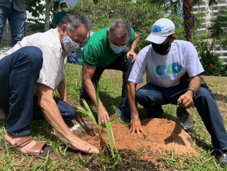 Plantio de mudas marca homenagem aos profissionais da saúde e às vítimas da Covid-19