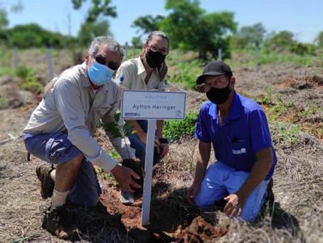 Bosques da Memória terão uma árvore para cada vítima da COVID-19