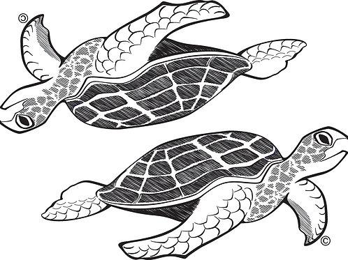Turtle BW2