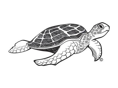 Turtle BW 1