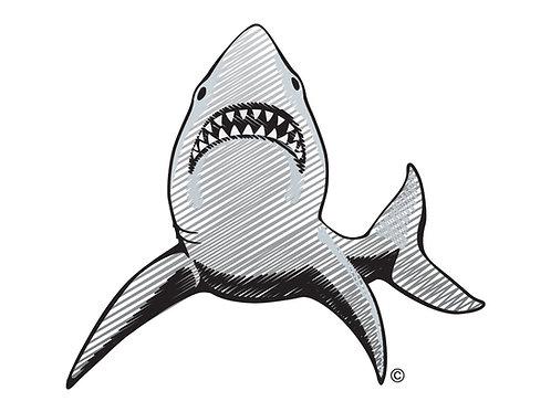 Shark BW