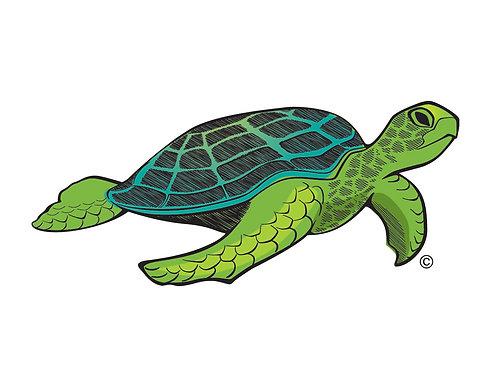 Turtle GRN1