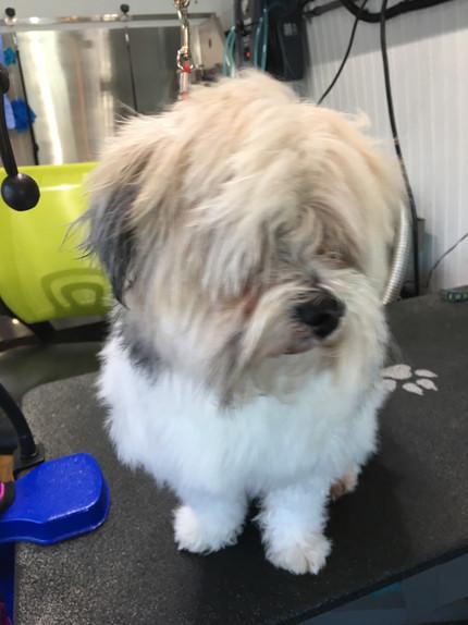 Dog Grooming In Fort Saskatchewan