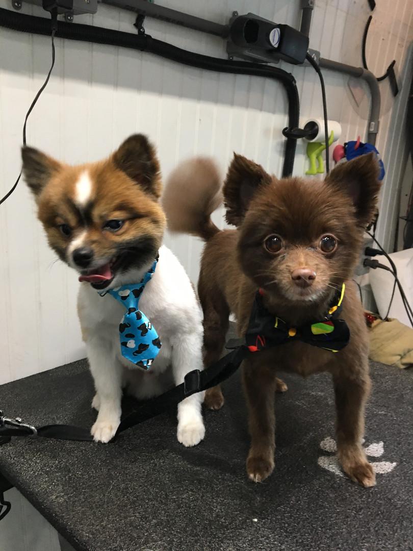 Mobile Pet Grooming In Fort Saskatchewan