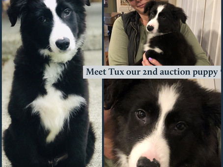 Tux the 2nd Auction Puppy