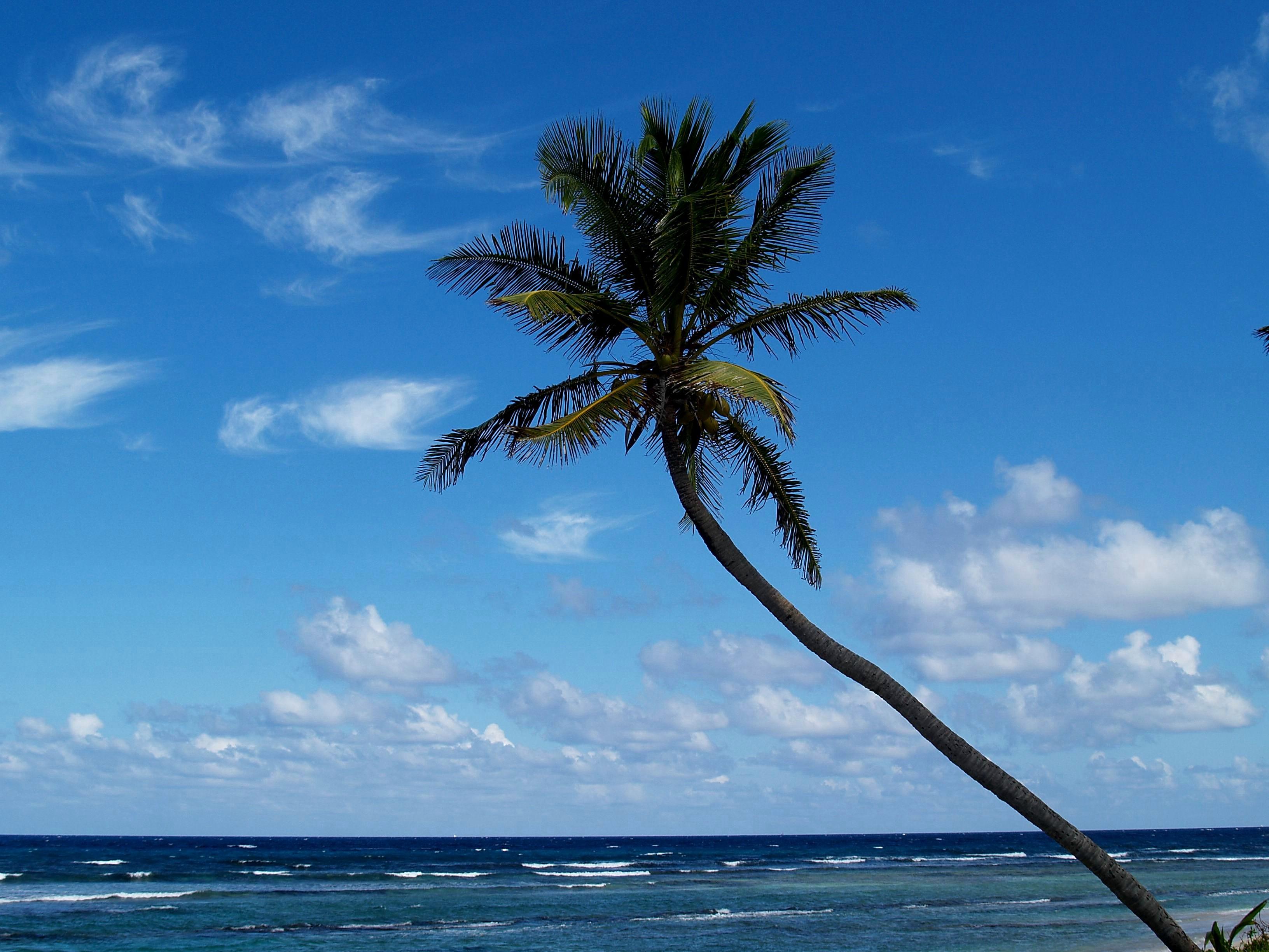 Hibiscus Beach, St. Croix