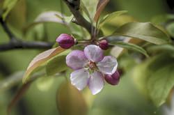 flowers-blooming-4247496_1920.jpg