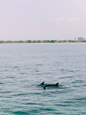 Private Catamaran around Marco Island