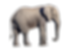 elephant-png-25.png