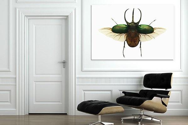 tableau-coleoptere-marion-lechat.jpg