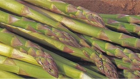 Asparagus Business in Europe