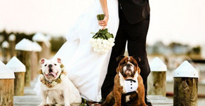 What to Consider Before Including Your Pup in The Wedding