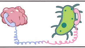Magen och hjärnan: Psykiska sjukdomar avspeglas i magtarmfloran