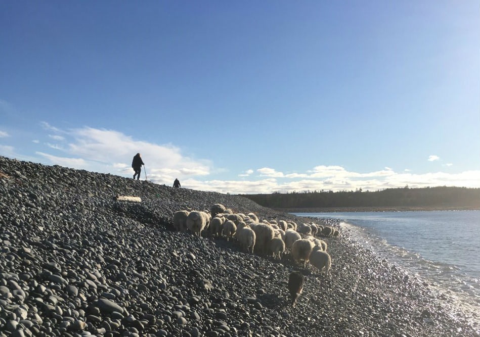 move sheep