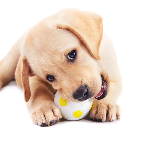 ציוד לכלב חדש בבית-מה צריך להתחלה חדשה בכף ימין