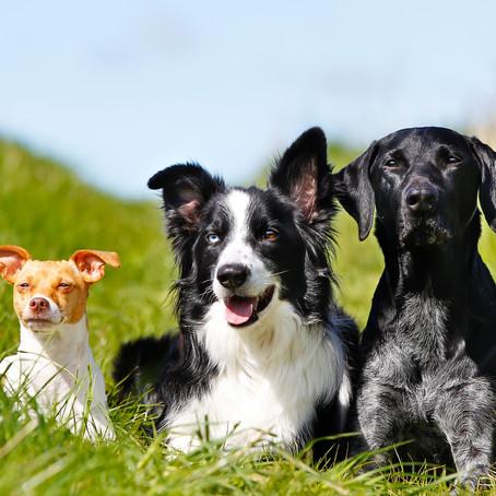 הגיע הקיץ- ולכלבים שלנו חם! וזה יכול להיות מסוכן.