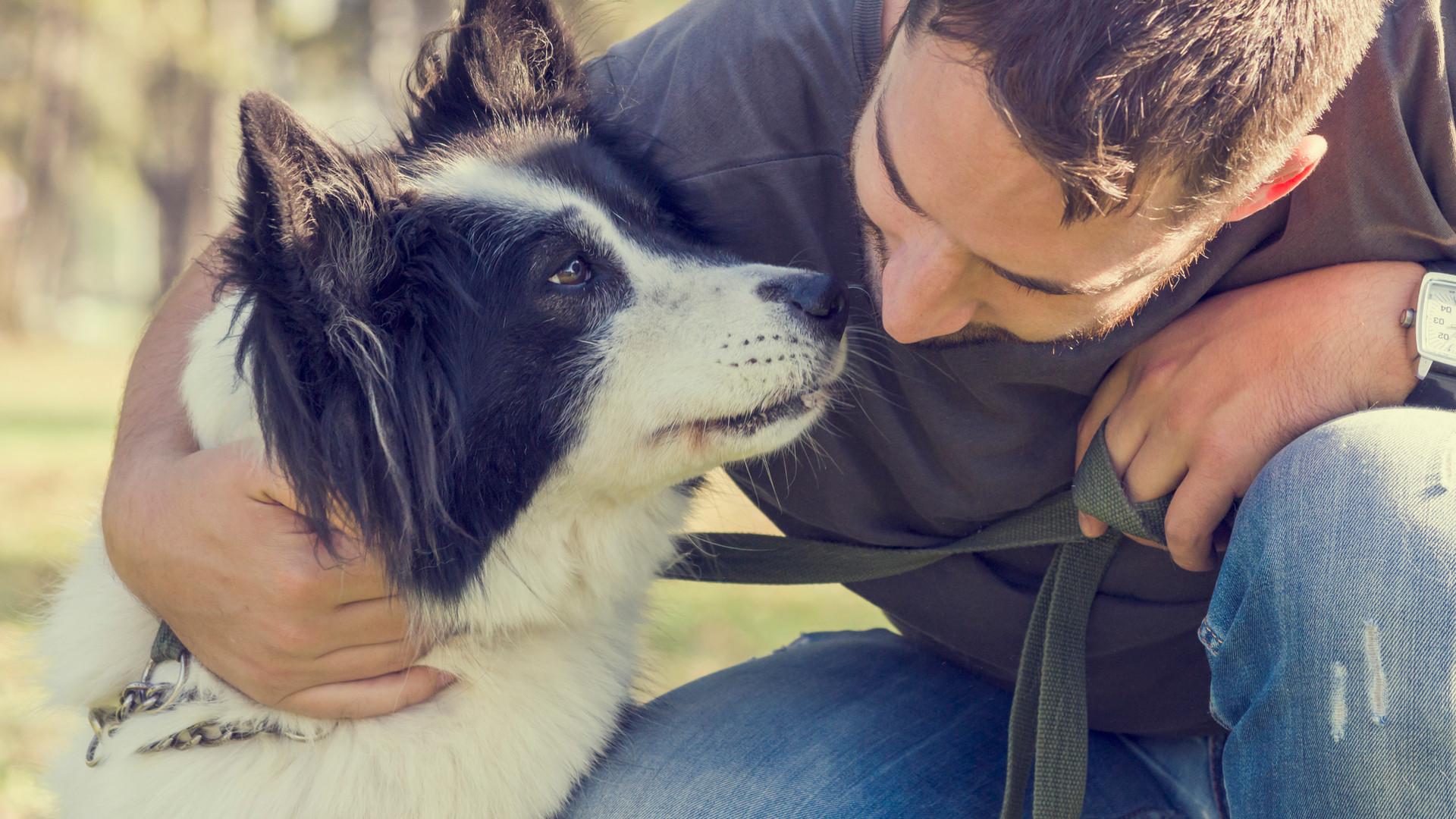 קשר בין כלב לבעלים