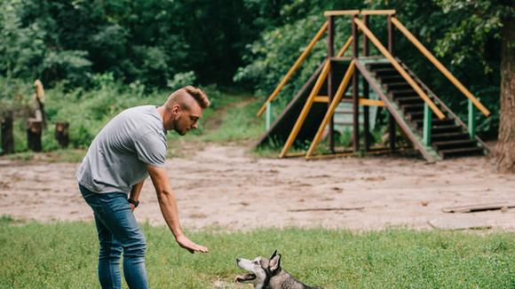 בעלים מאלף כלב