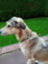 Lilly (2).jpg