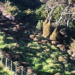 Takatu hillside 1.jpg
