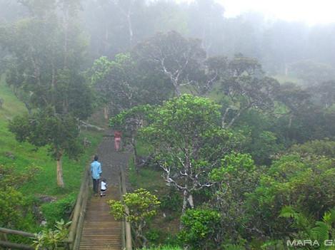 Mauritius | Giardino Botanico | La Pace