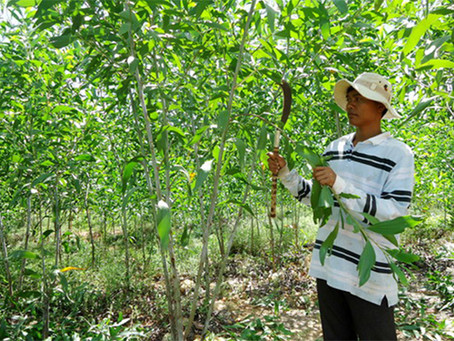 Boosting green credit for sustainable development in Viet Nam