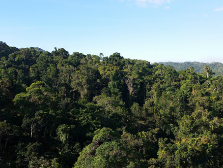 Forests provide a critical short-term solution to climate change