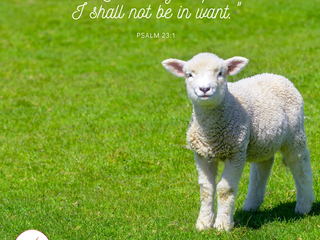 """""""The Lord is my shepherd; I shall not be in want."""" (Psalm 23:1)"""