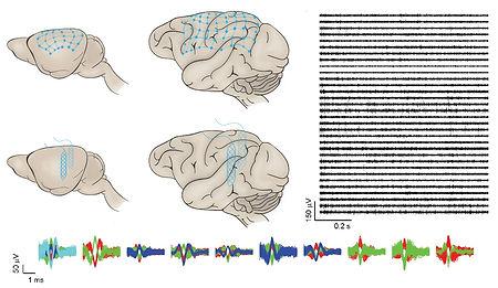 20200218_different brains]-01.jpg
