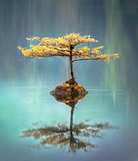 Web Photo Books Water Tree_edited.jpg
