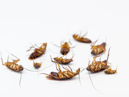 Pest-Proofing Home Tips