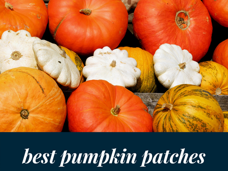 Austin's Best Pumpkin Patches